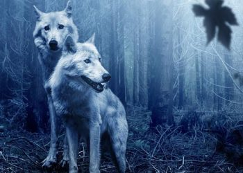 two white wolves in the blue darkness